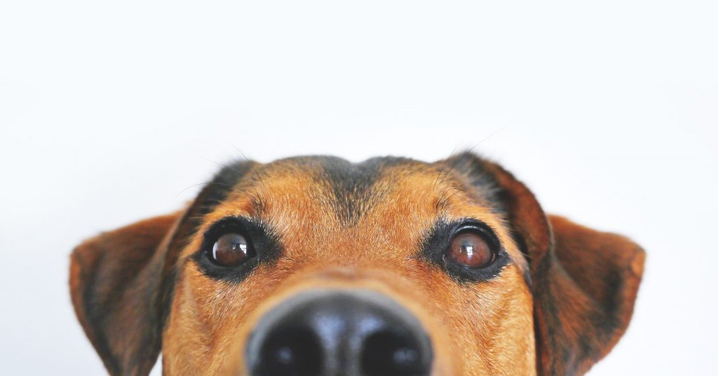 dog for oversleeping